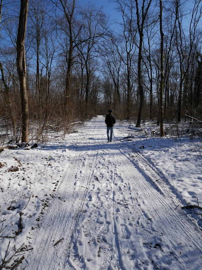 Man walking in a snowy forest - fighting the Coronavirus blues by going on a walk